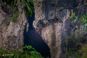 В Таиланде обитает самое маленькое в мире млекопитающее, летучая мышь-шмель, продолжительность жизни некоторых видов достигает 30 лет.